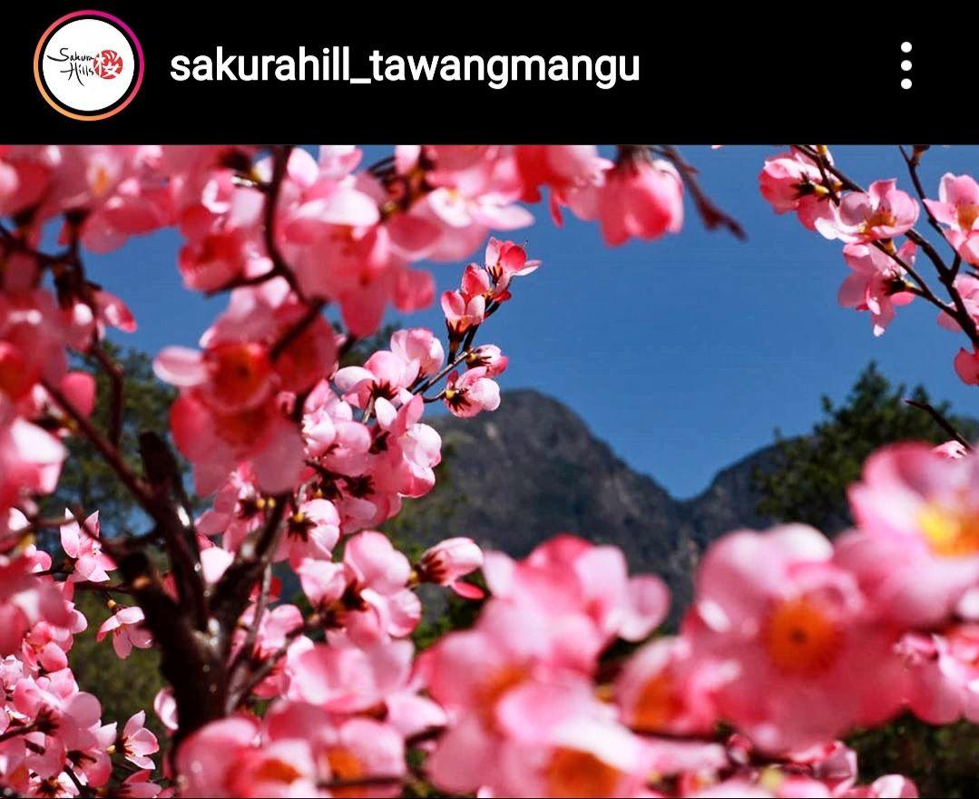 Bunga sakura asli di sakura hills