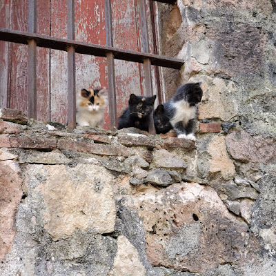 four kittens on the windowsill of an old stone building. the window is barred by iron and boarded up.