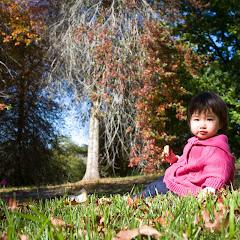 2011 04 25 Mt Lofty Botanic Garden - IMG_6602.jpg