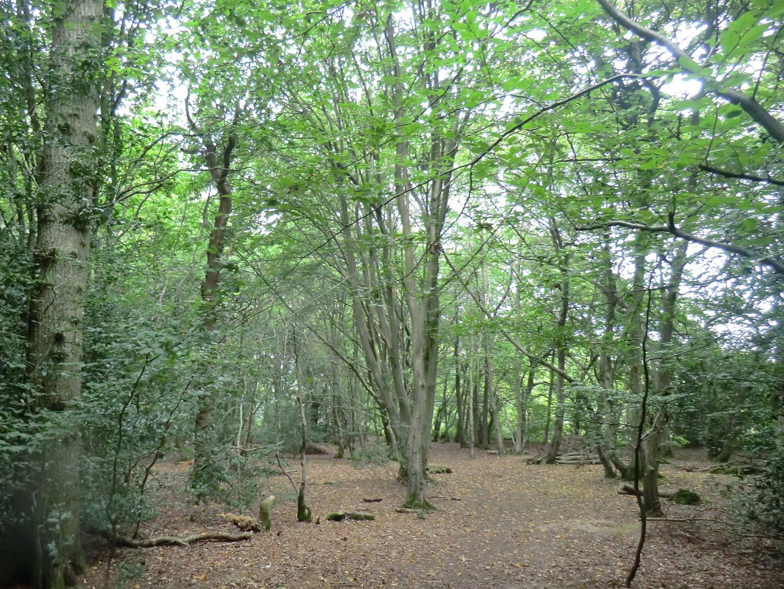 CIMG4619 Woodland path, Bedelands Farm Nature Reserve