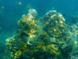 family trip pulau harapan, 1-2 agustus 2015 gopro 17