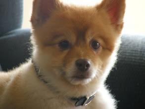 Photo: My OTHER Grandparents dog Cashew