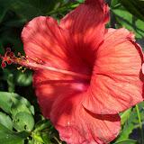 Gardening 2009 - 101_4546.JPG