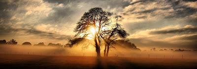 δέντρο,Δρυάδες, Νύμφες των δέντρων, των ελαιώνων και των ορεινών δασών,tree, Dryads, Nymphs of trees, olive groves and mountain forests