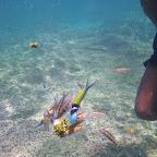 Fauna del arrecife de coral de San Bernardo