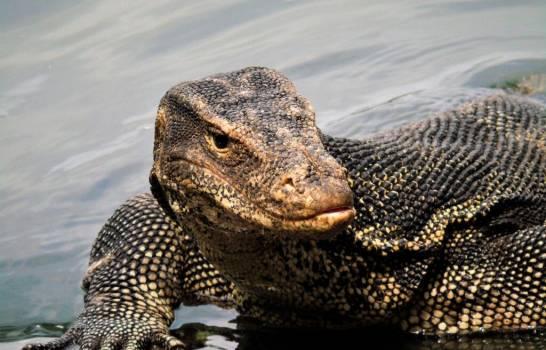 Peligroso lagarto que se escapó de su jaula en Nueva York  es buscado activamente por la policía