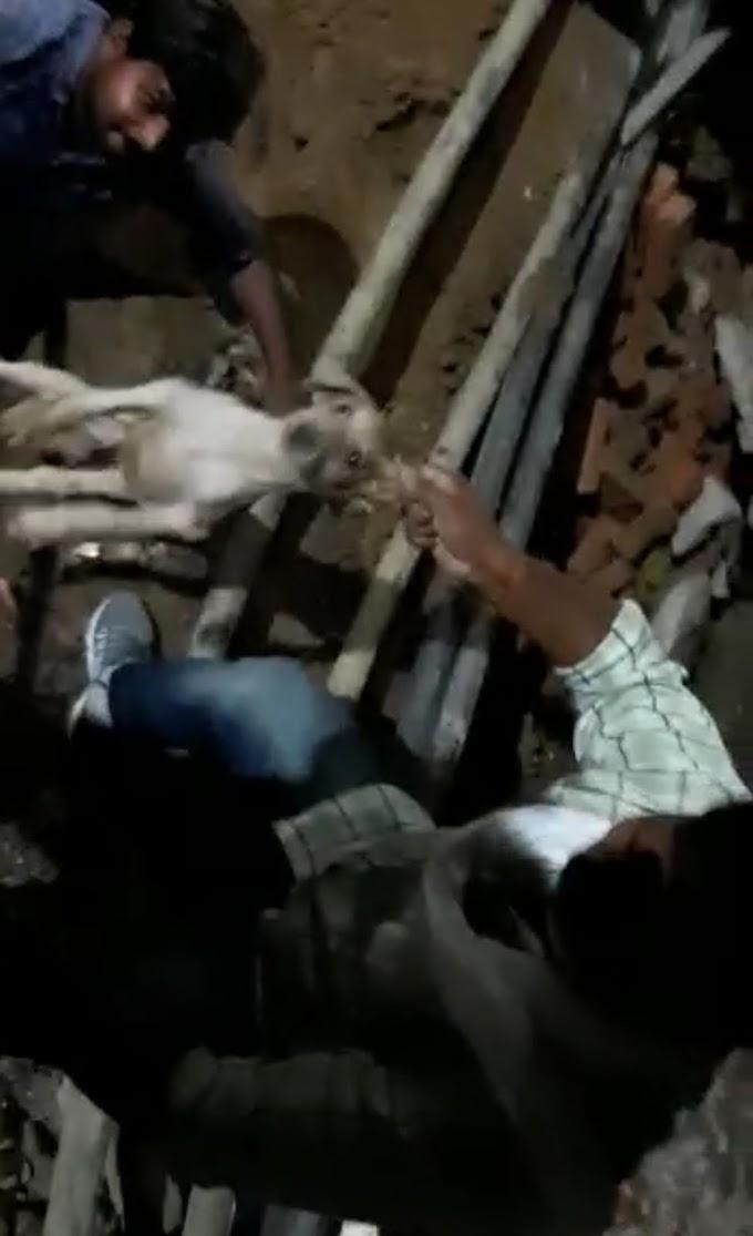 पुलिस ने दिखाई दरियादिली, पाइप लाइन में फंसे कुत्ते की जान बचाई