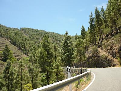 Waldgebiet in Gran Canarias Bergland