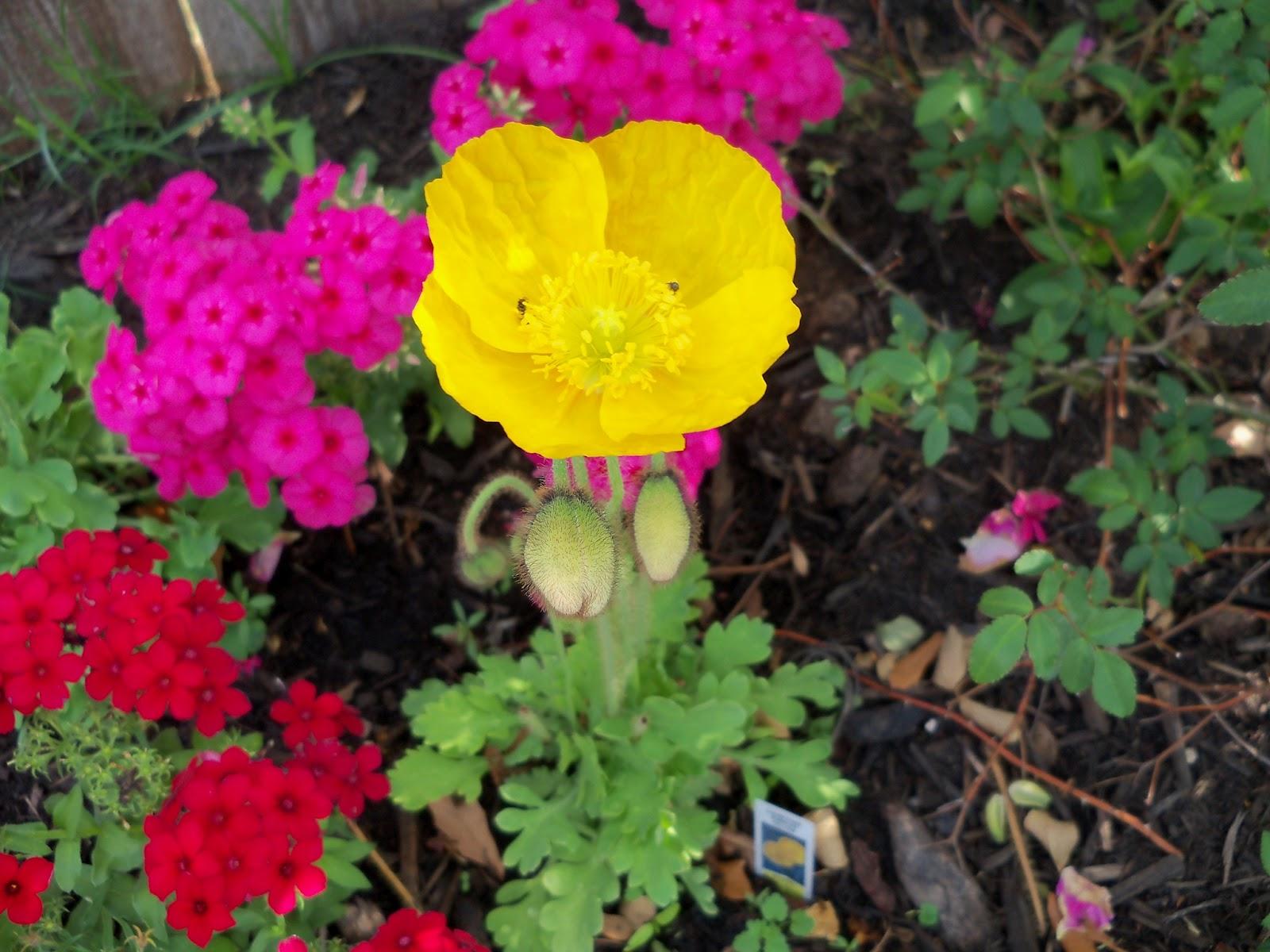Gardening 2011 - 100_7088.JPG