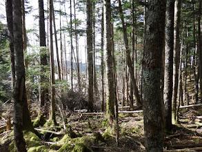 ここから倒木帯