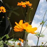 Gardening 2012 - IMG_3789.JPG