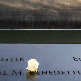 Remembering 9/11 by Thomas Shaw - Uncategorized All Uncategorized ( 11, trade center, center, remembering, world trade center, 2001, nikon d7200, one world trade center, 9/11, water, new york, flower, nikon, september, white, new york city, name, 911, memorial, photography )