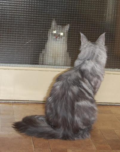 [Obrazek: koty.JPG]