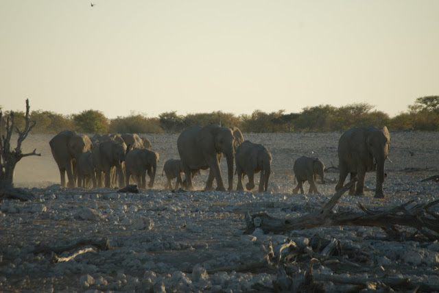 أفضل ما في أفريقيا  Best of Africa Namibia_090907111027