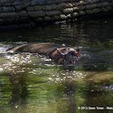 04-07-12 Homosassa Springs State Park - IMGP4539.JPG