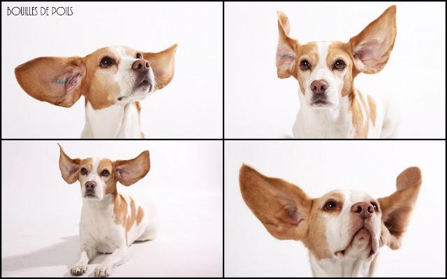 Bouilles de Poils - photos Studio - cannelle-opiate%2B-%2BCopie.JPG