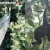 Spot Wisata Suguhkan  Keindahan Alam Hingga Satwa Liar Endemik di Taman Nasional Gunung Halimun Salak Sukabumi