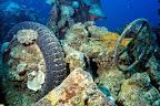 ... through a 250 km-long barrier reef between twelve and mountainous islands.