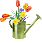 Watering-Can-and-Tulips