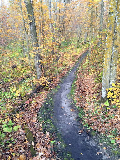 Singletrack after leaf clearing. Ocotber 6th, 2016