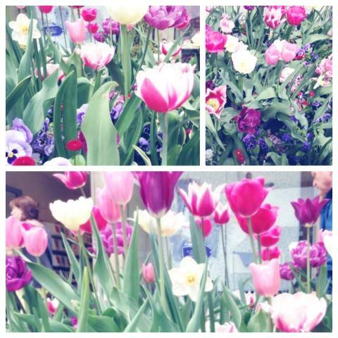 Blumenrausch in der Münchner Innenstadt