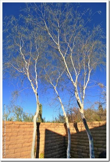151230_Tucson_Tohono-Chul-Park_0034