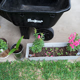 Gardening 2011 - 100_7387.JPG