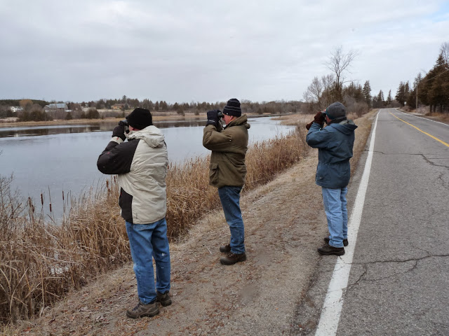 Christmas Bird Count 2010