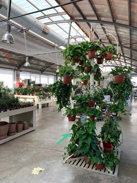 Plantas de interior centro de jardinería FUPAR
