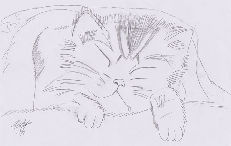 Sleeping Cat Drawing