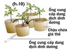 Các cách trồng rau thủy canh - 56874bcc509dc