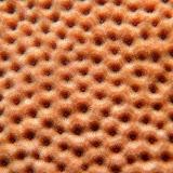 Starlet Coral. St Thomas Snorkeling.