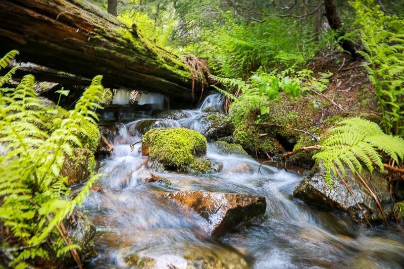 revett lake trail-11