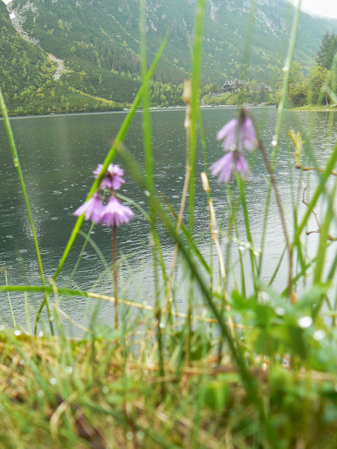 Zajęcia terenowe w Tatrzańskim Parku Narodowym - P1610605.JPG
