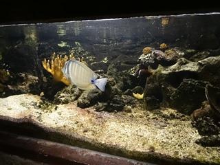 2016.03.14-028 poissons