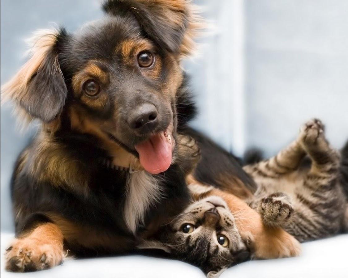 Kucing Lucu Dan Anjing Puzzle Apl Android Di Google Play