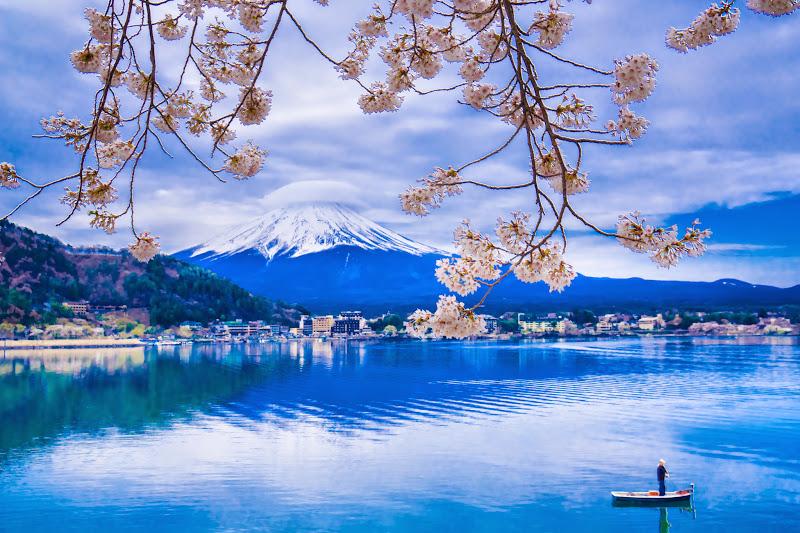 河口湖 桜 写真3