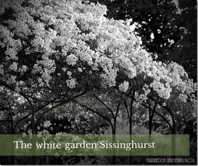 •the white garden (6)