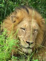 Thornybush Reserve, Kruger NP