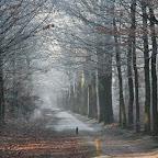 Zeisterbos December 2007 024.jpg