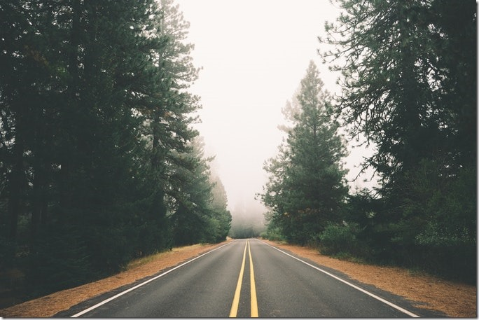road-street-forest-fog