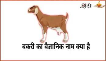 बकरी का वैज्ञानिक नाम | Bakri ka vaigyaanik naam | Scientific name of Goat