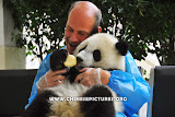 Foreigner and Chinese Panda Photo 1