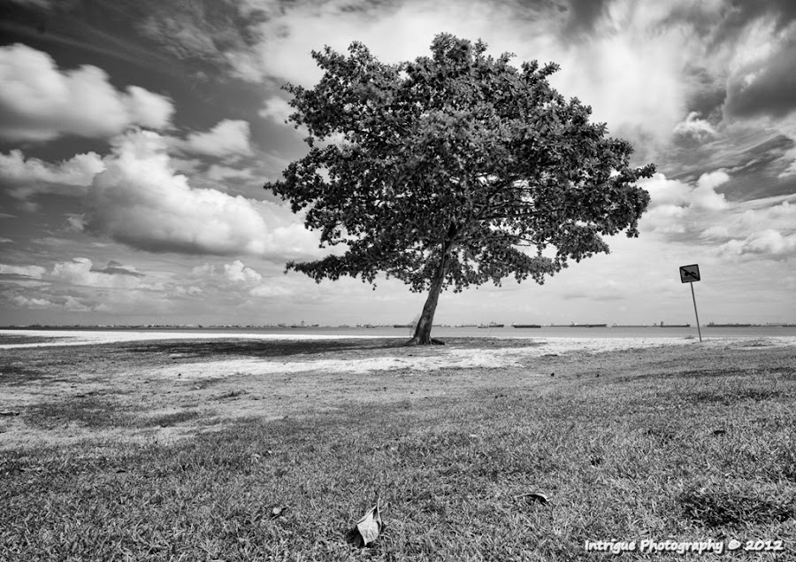All Alone by Edwin Ng - Landscapes Prairies, Meadows & Fields ( field, tree, white, landscape, alone, black )