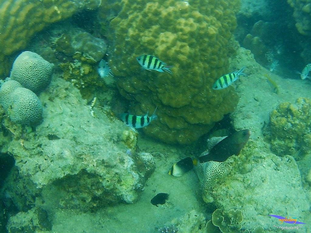family trip pulau pari 090716 GoPro 45