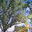 Moore's tree service's profile photo