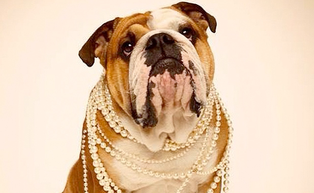 BEAUTIFUL FASHIONABLE PETS WOMEN CAN OWN IN THEIR HOME TO ENJOY 6