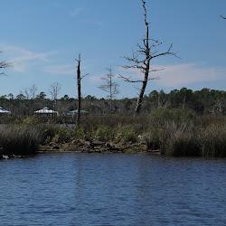 Fowl Marsh from Boat Feb3 2013 224