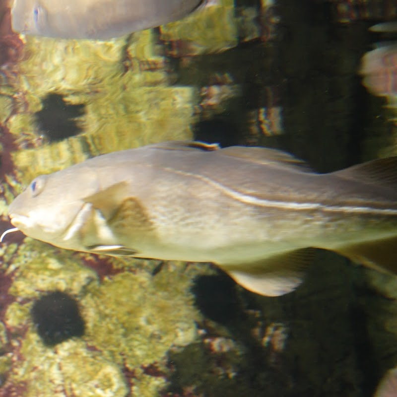 Aquarium_06.jpg