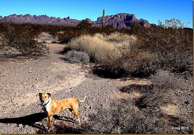 Yuma and I walking the Sonoran Desert